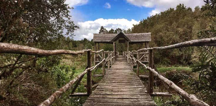 Puente entrada EBSD