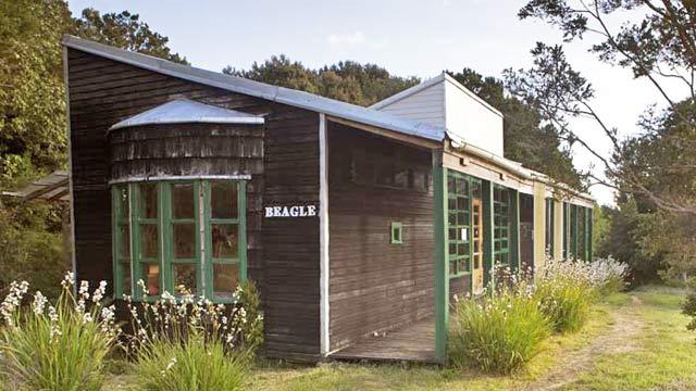 centro beagle exterio a
