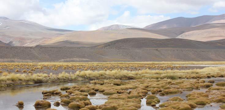 biodiversidad altoandina