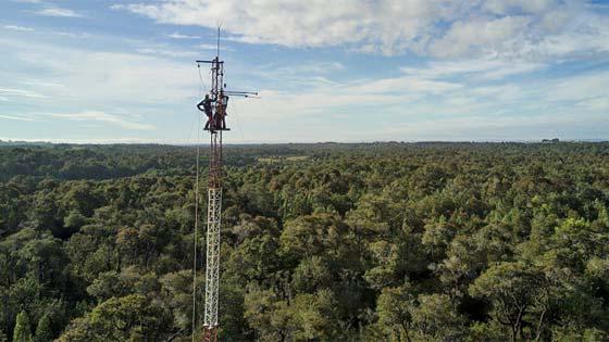 Torre medición de carbono