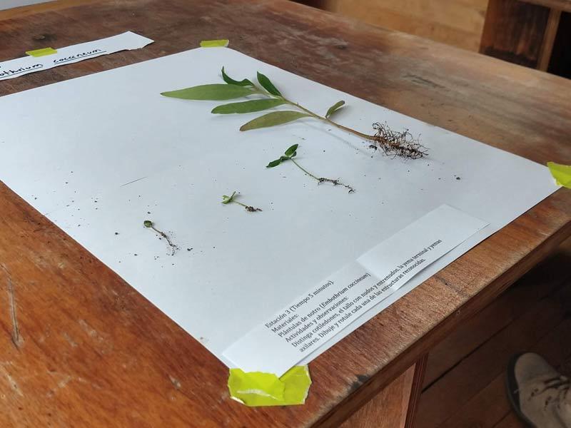 Curso ilustración botánica 2019