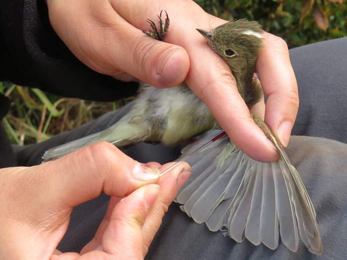 biodiversidad avifauna