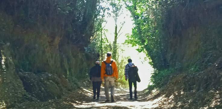bosques de chiloe