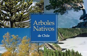 enersis arboles nativos de chile
