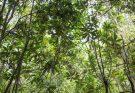 bosque senda darwin daniel casado