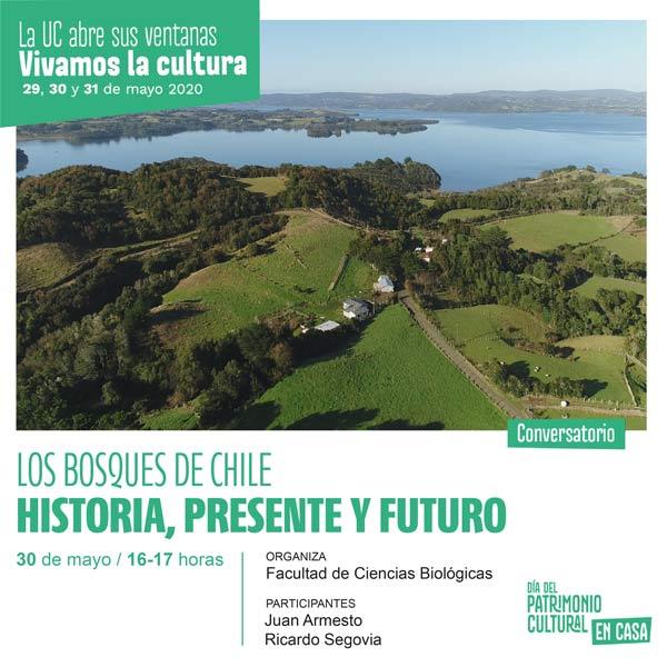 los bosques de chile historia