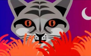 gato andino