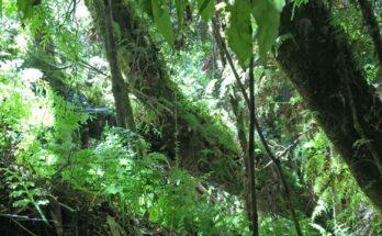 bosques antiguos