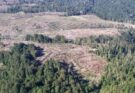 deforestacion bosque nativo