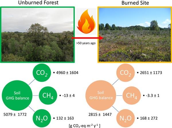 bosques quemados y sin quemar