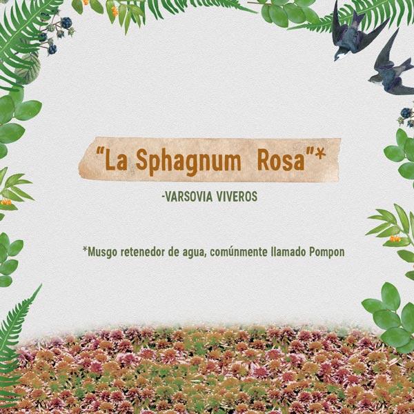 la sphagnum rosa viveros