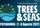 Festival Trees & Seas