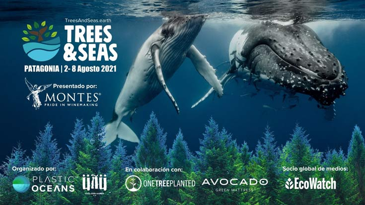 trees and seas afiche